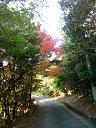 2008年12月初めの多々良道の紅葉です