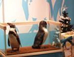 ペンギンさんはマイペース