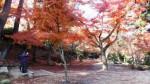9 紅葉谷公園. 四宮神社付近jpg