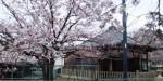 桜の季節 不動堂