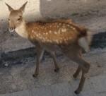 小鹿ちゃん