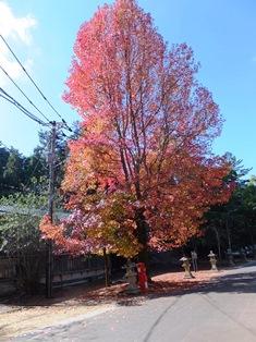 水族館前の紅葉