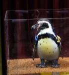 ペンギンモデルさんです