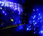 青のLED