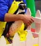 なでなでペンギン