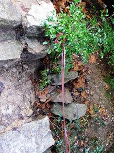 崩れた登山道