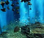 牡蠣水槽の小イワシの群れ