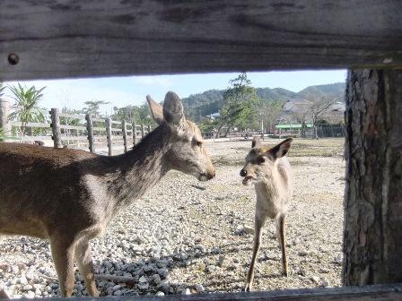 大願寺そば鹿牧場?
