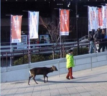 宮島桟橋の鹿