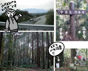 陸橋と杉林