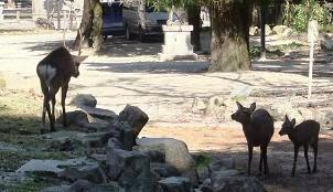 13 鹿の家族