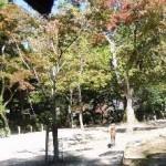 四宮神社前の景色