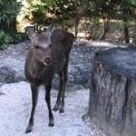 あら、いたのね鹿さん