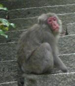 20090515_弥山で出会ったおさる