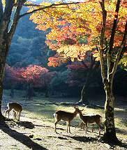 20101124_木比谷公園