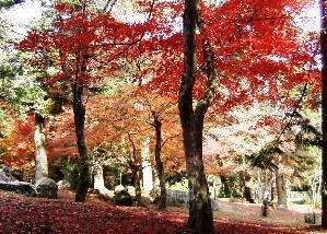 2010、11、29_大元公園