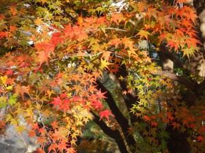 山辺の紅葉