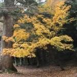 木比屋谷の紅葉