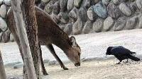 鹿は?マイペース