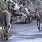 6-2おはよう鹿さん