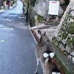 おはよう鹿さん