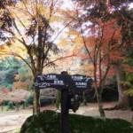 木比屋谷の紅葉2