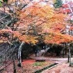四宮神社のそば、もみじ道