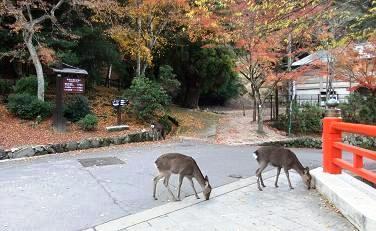 大聖院前の鹿さん