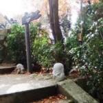 弥山本堂へ続く階段