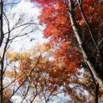 弥山の紅葉