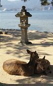 宮島の鹿さん