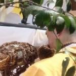 ホラ貝をふく山伏