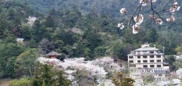神泉寺跡から見た風景