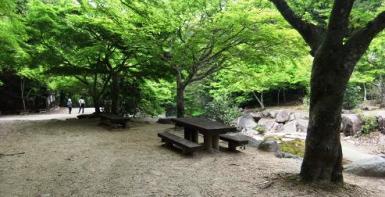 新緑のもみじ谷公園
