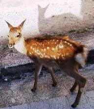 バンビに会いました