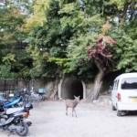 トンネルを抜けると四の宮神社