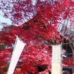 大聖院の紅葉
