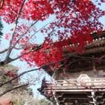 大聖院の紅葉3