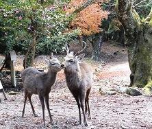 鹿さんはラブラブ